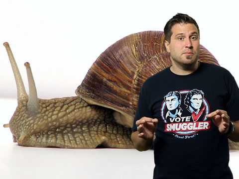 TWIE 106: Bionic Snail